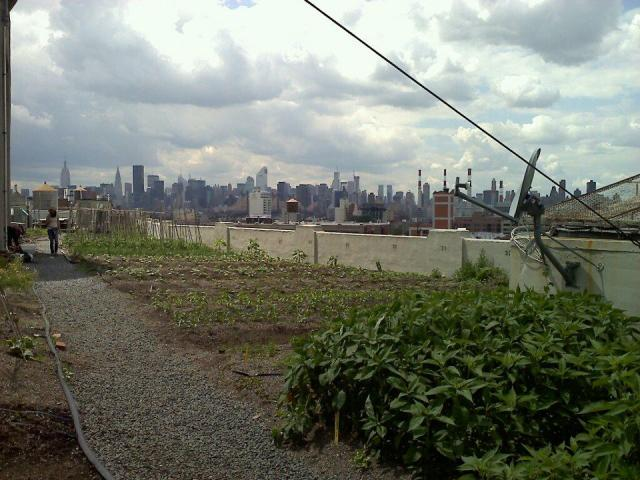 At the Brooklyn Grange Rooftop farm in LIC. Steps away from MFTA!
